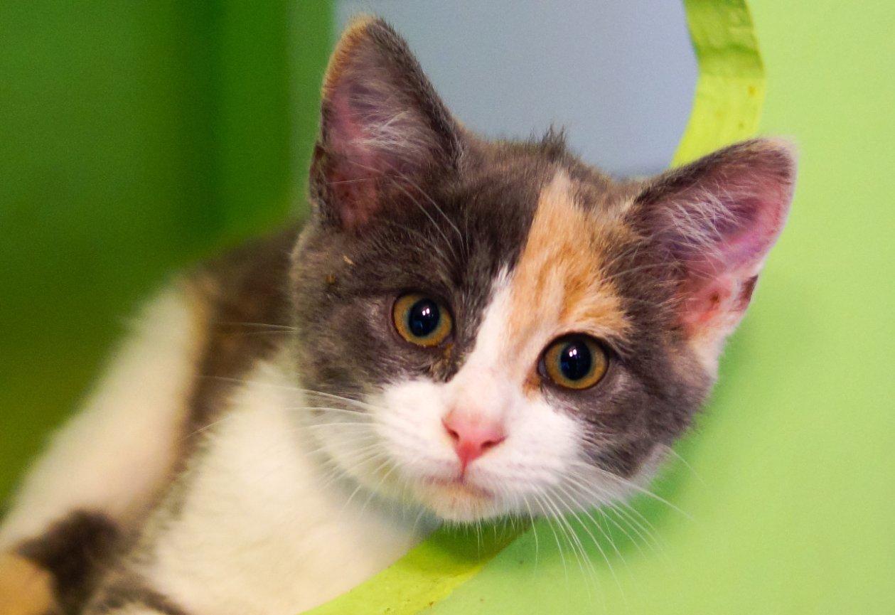 About Cat S Cradle Animal Rescue Harrisonburg Va
