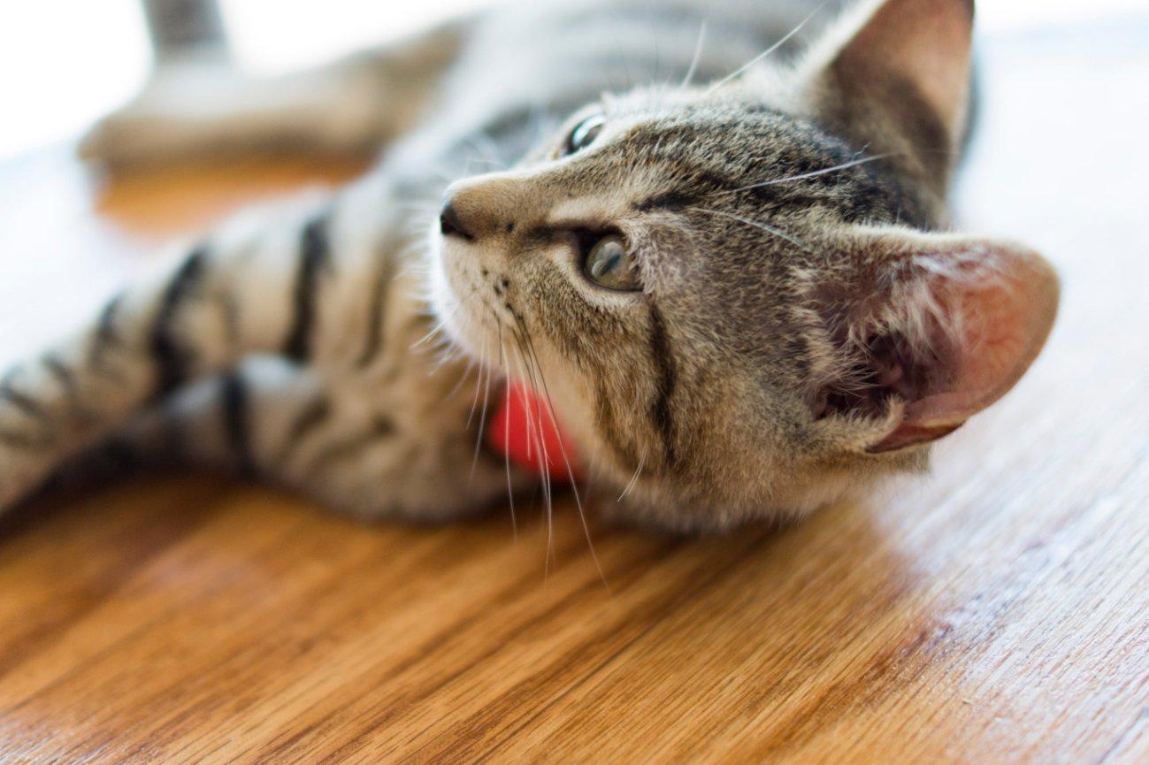 Cat S Cradle Animal Rescue Harrisonburg Va